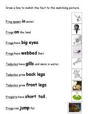 English Worksheet: Matching for Frog Life Cycle
