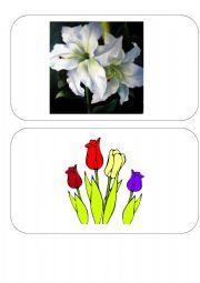 English Worksheet: Easter FLASH CARDS- SET 4 of 4