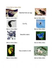 English Worksheets: Birds:  Is it a bird?