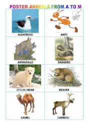 Alphabetical poster of animals from A to M + exercises + game