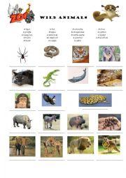 English Worksheets: Wild animals vocabulary
