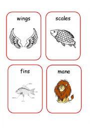 English Worksheets: Animals Body Parts - 1