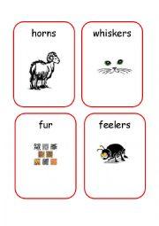 English Worksheets: Animals Body Parts - 2