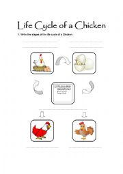 photo about Life Cycle of a Chicken Printable named English worksheets: Daily life Cycle of a Hen