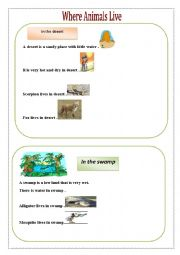 English Worksheets: where  do animals live