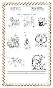 English Worksheets: Colours and Insects
