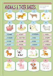 English Worksheet: Animals & their babies