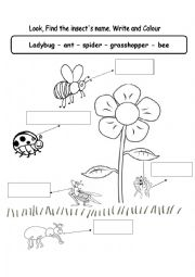 English Worksheet: �nsects (bugs)
