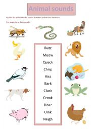 English Worksheet: animal sounds
