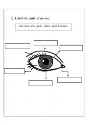 english worksheets parts of an eye. Black Bedroom Furniture Sets. Home Design Ideas