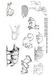 ANIMALS IN WINTER - ESL worksheet by subforlove