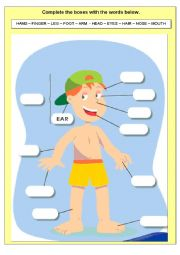 English Worksheet: HUMAN BODY EXERCISE