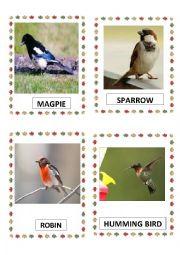 English Worksheet: BIRDS PART-6