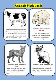 English Worksheet: Mammals Flash Cards