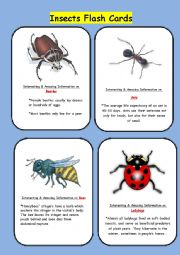 English Worksheet: Insect Flash Cards