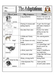 Printables Animal Adaptations Worksheets adaptations worksheets davezan animal for kids abnt