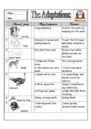 Printables Animal Adaptations Worksheets adaptations worksheets davezan animal for kids abnt