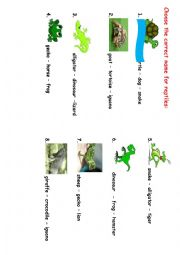 English Worksheet: reptiles