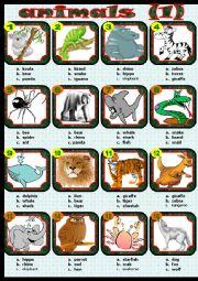 English Worksheet: animals (1)