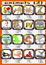 English Worksheet: animals (2)
