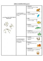 English Worksheet: Animal classification (part 2)