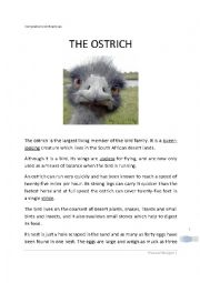 English Worksheet: The Ostrich