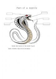 English Worksheet: parts of a reptile