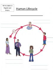 English Worksheet: Human Life Cycle - Vocabulary Sheet