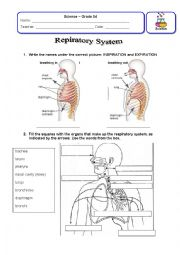 english worksheets respiratory system review. Black Bedroom Furniture Sets. Home Design Ideas