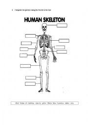 English Worksheet: HUMAN SKELETON