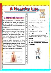 English Worksheet: the digestive system- a wondeful machine