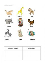 ANIMALS CLASSIFICATION