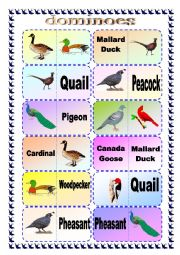 English Worksheet: Bird Breed Domino Game