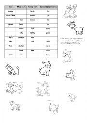 English Worksheet: Baby Animals