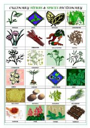 English Worksheet: CULINARY HERBS & SPICES PICTIONARY