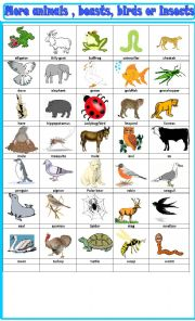 English Worksheet: more animals beasts and birds: pictionary