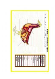 English Worksheet: Internal parts of Hen