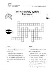 English Worksheet: Respiratory System Crossword