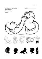 English Worksheet: Baby & Family Review Kinder worksheet