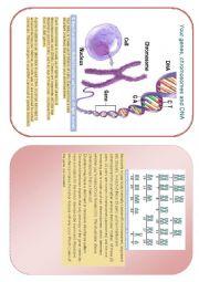 English Worksheet: genes, chromosomes and DNA