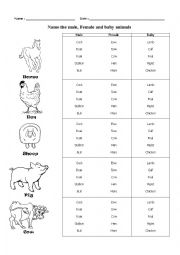 English Worksheet: Male, Female and Baby Animals