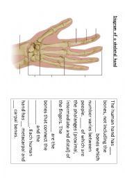 The Bones in the Hand