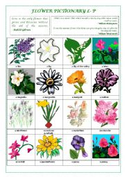 English Worksheet: FLOWERS PICTIONARY L- P (part III)