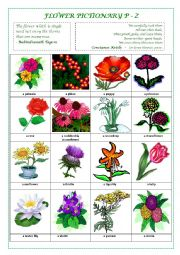 English Worksheet: FLOWERS PICTIONARY P - Z (part IV)