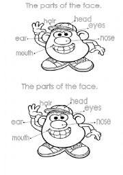 English Worksheet: parts of the face