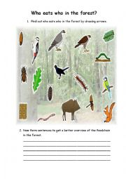 Find out who eats who (food chain) in the forest