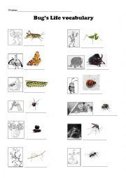 English Worksheet: Bugs Vocabulary - Movie