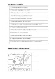 English Worksheet: SCIENCE QUIZ Nervous System and the senses