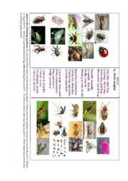 English Worksheet: Bugs ( a poem full of insects)