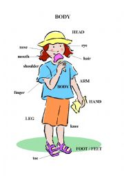 English Worksheet: Body (picture with basic words)